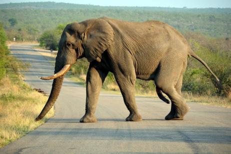 Cape & Kruger – Cape Town and Kruger Park Safari tour