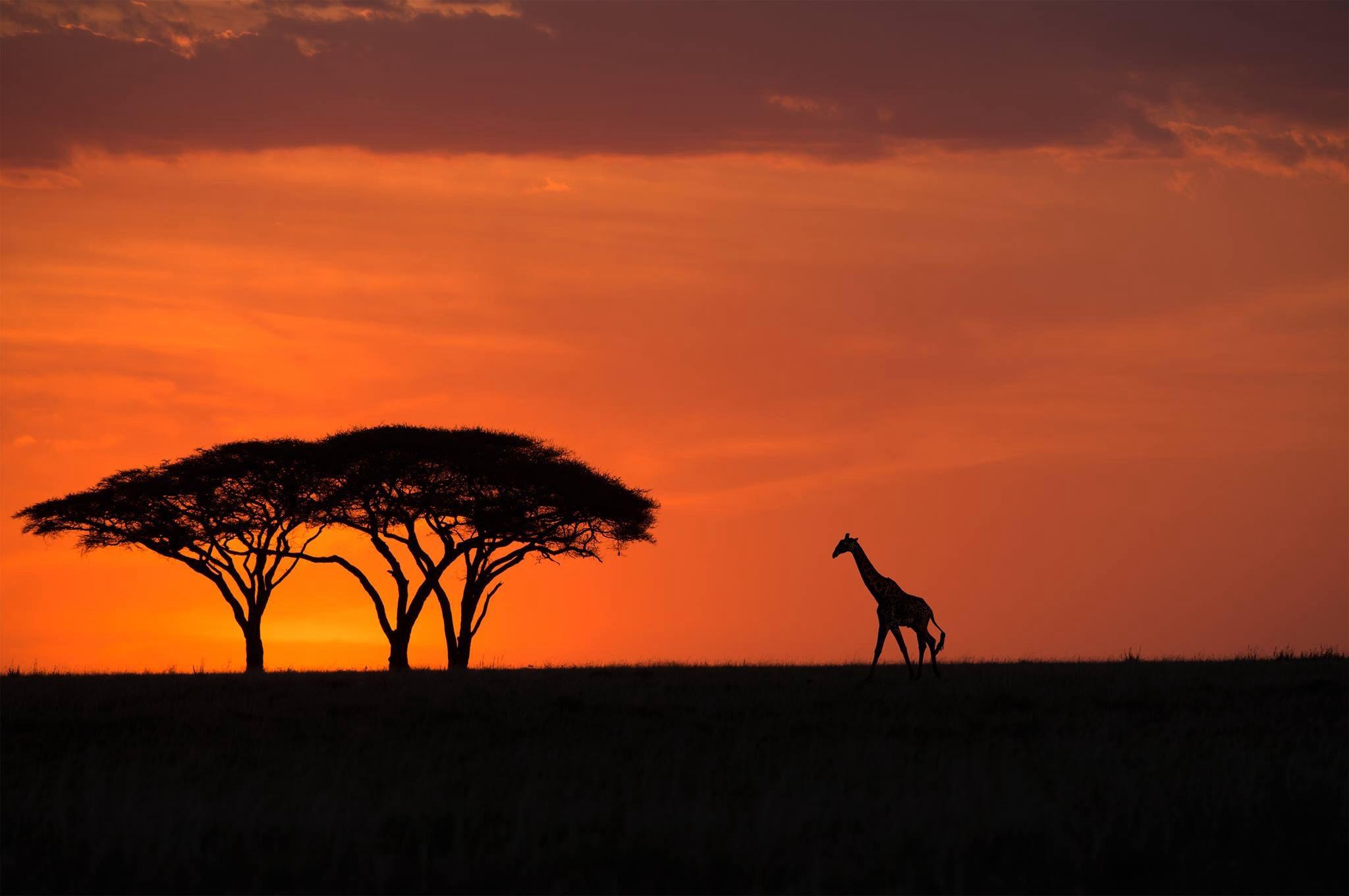 Wilderness Safaris & Zanzibar tour