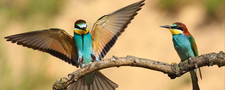 Top 10 Birding Attractions Landmarks [Updated 2018]