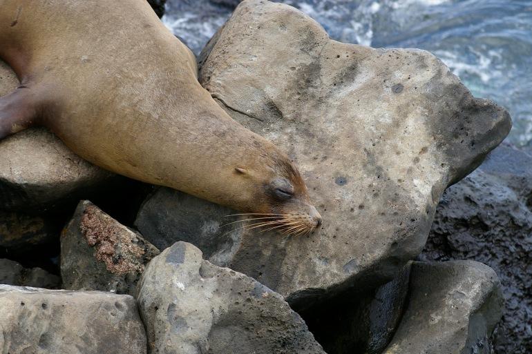 Nature World Galapagos-Ecuador-3236306_1920_P