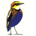 Birdtour Asia logo
