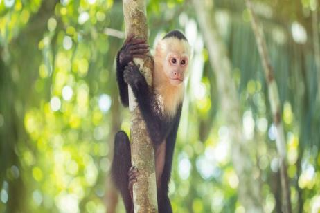 Costa Rica Family Experience tour