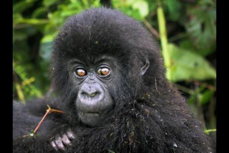 Private Departure - Gorilla and Chimp Safari tour
