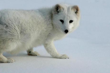 Arctic Watch Lodge tour