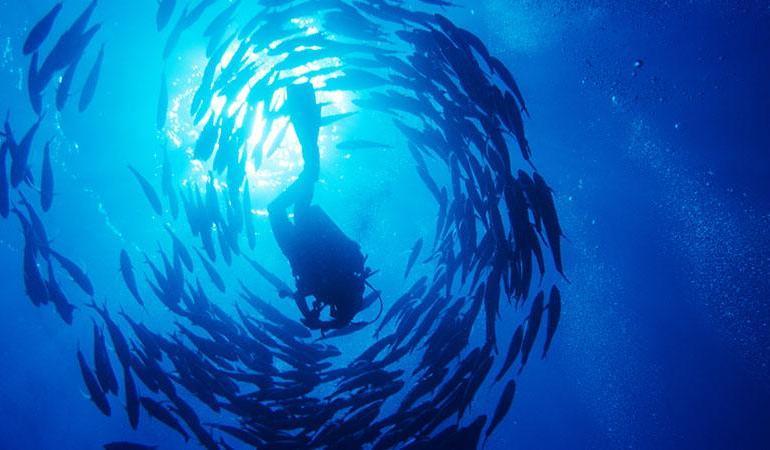 Hurghada 10-Dive Package tour