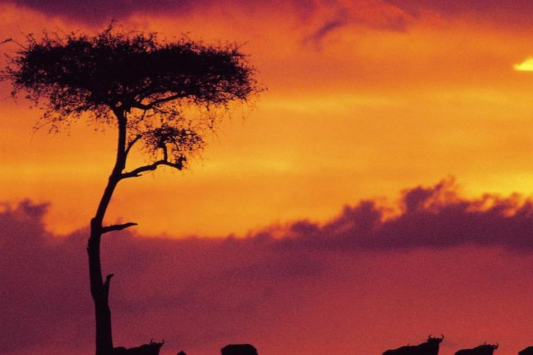 African Safari Adventure Summer 2019 tour