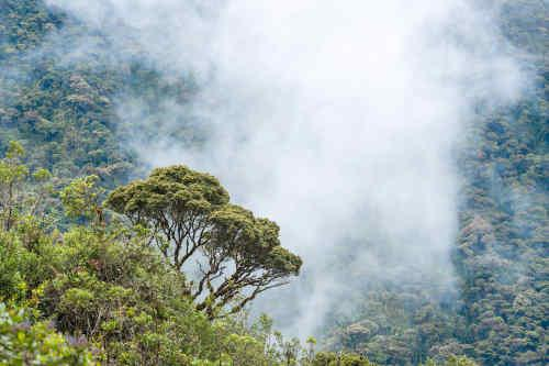 Above the Clouds: Journey to Quito tour