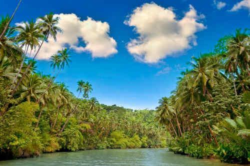 Rio de Janeiro, Iguassu Falls & Amazon River Cruise tour