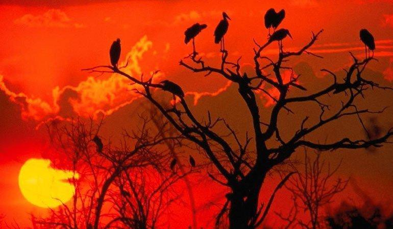 Safari Safari East African Odyssey package