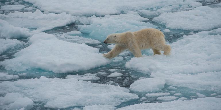Realm of the Polar Bear tour