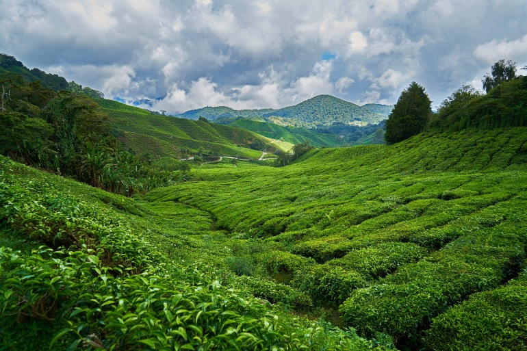 Mountain filled with green plants-2289495-1920-P