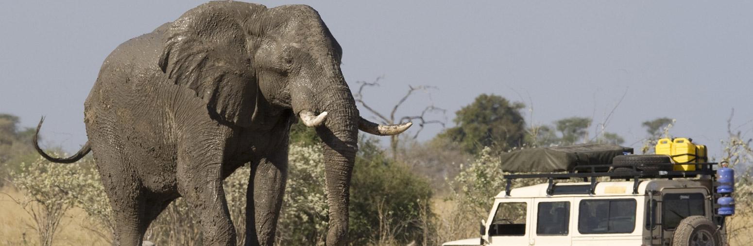 United Arab Emirates Panama 5 Unforgettable African Safari Experiences
