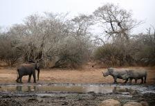 Kruger National Park, South Africa tour