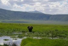 Ngorongoro Crater tour