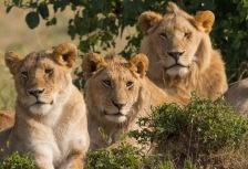 Masai Mara  National Park tour