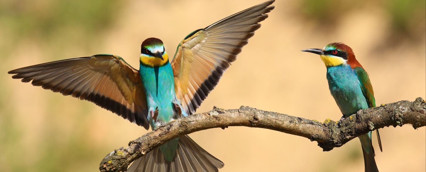 Find guided birding tours around the world