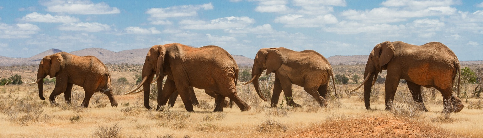 The best African Safaris for Boomers