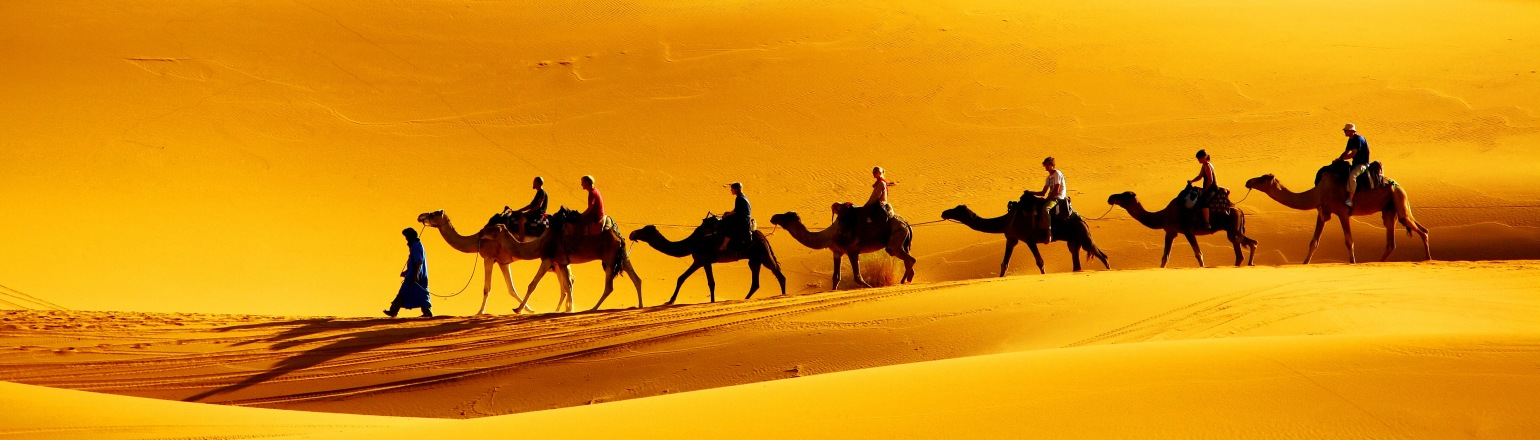 riding camels guided group tour experience