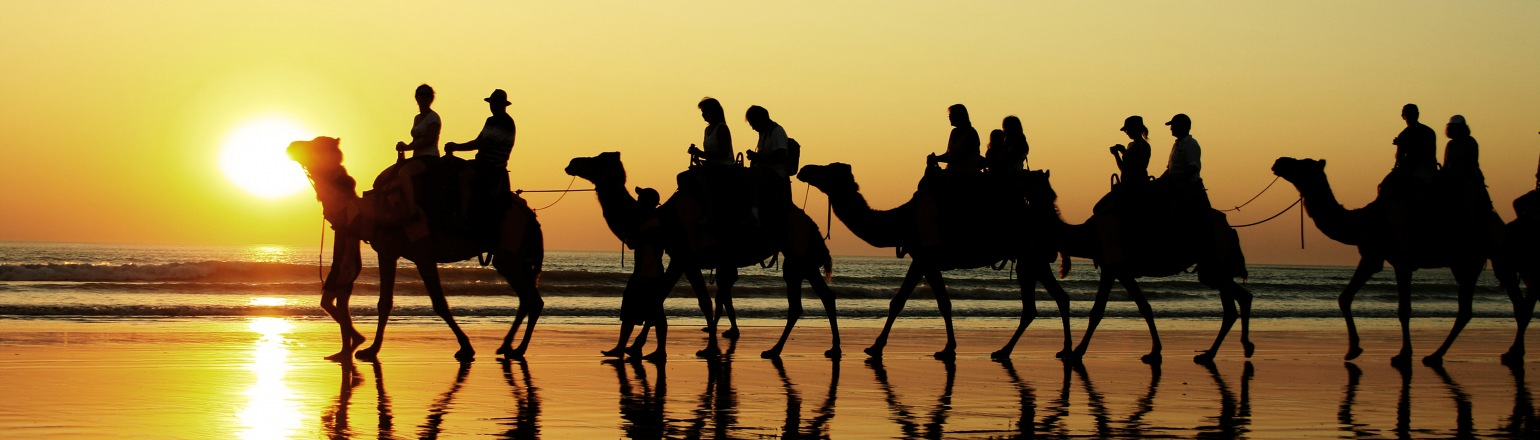 String of camels on tour in the Middle East