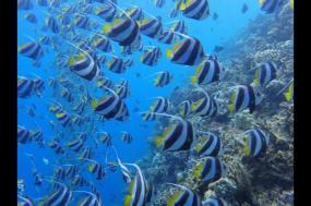 Maldives Island Adventure tour