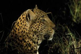 Kruger & Cape Town Experience - Independent tour