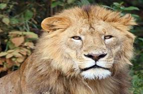 Kenya & Tanzania The Safari Experience with Nairobi tour