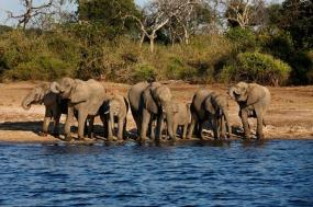 13 Day Deluxe South Africa with Victoria Falls & Chobe River Safari 2018 Itinerary tour