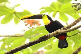 COSTA RICA ESCAPE WITH TORTUGUERO tour