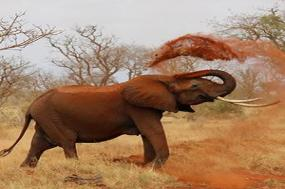 Kenya & Tanzania Private Safari with Nairobi & Zanzibar  Stone Town tour