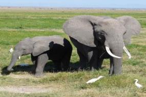 Kenya & Tanzania Private Safari tour