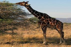 Kenya Private Safari with Nairobi & Samburu National Reserve Area tour