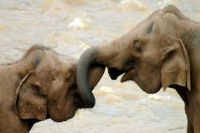 Chiang Mai & Elephants  tour