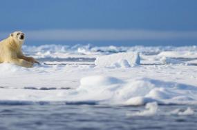 Spitsbergen Photography Adventure tour