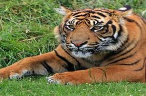 Icons of India: The Taj, Tigers & Beyond with Kathmandu tour