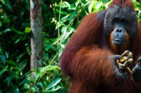 Highlights of Borneo tour