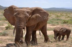 Kenya & Tanzania Private Safari with Zanzibar  Stone Town tour