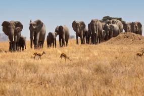 Falls, Beaches & Serengeti Adventure (Southbound) tour