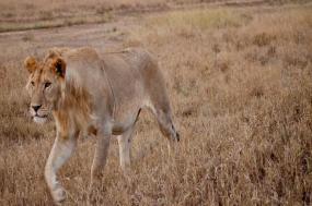 Serengeti to Victoria Falls Adventure tour