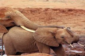 Kenya: A Classic  Safari with Nairobi tour