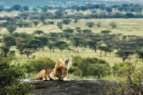 East African Explorer 21 Day tour