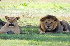 Kenya & Tanzania The Safari Experience with Nairobi & Zanzibar tour