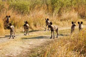 Southern Africa Wildlife & Wine tour