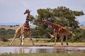 Kenya Private Safari with Samburu National Reserve Area tour