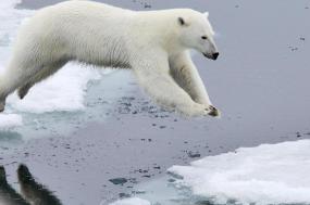 Spitsbergen in Depth tour