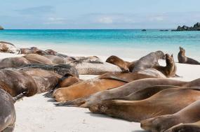 Galapagos Encounter - Central Islands (M/Y Coral)  tour