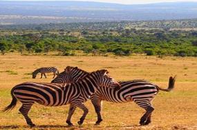 Kenya & Tanzania Private Safari with Nairobi & Zanzibar  Beach tour