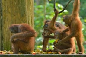 Enchanting Borneo tour