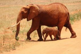 Rift Valley Trails Safari tour