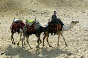 Camel Trekking Tour: Experience The Sahara Desert – 9 Days tour
