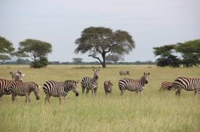 Best of Tanzania tour
